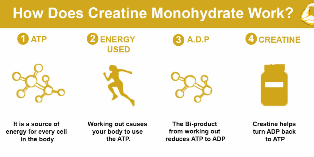 How Does Creatine Work?